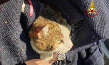 Padova, libera un gatto finito nel vano motore e lo adotta