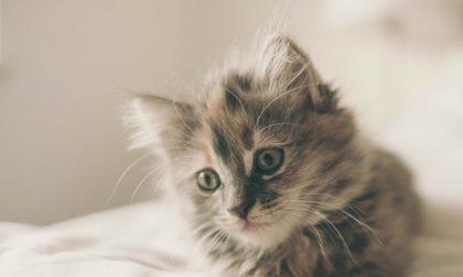 Vo', al via i test sierologici sui gatti del paese