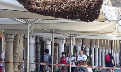 Padova: api in piazza dei frutti, deve intervenire un'apicoltore