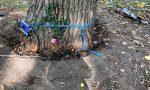 """Riaperto il """"parco dei Faggi"""" dopo la chiusura dovuta alla caduta di un pioppo"""