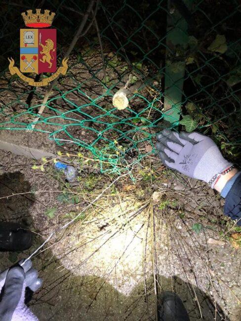 Volpe intrappolata in una rete rischiava di morire soffocata: salvata dai poliziotti