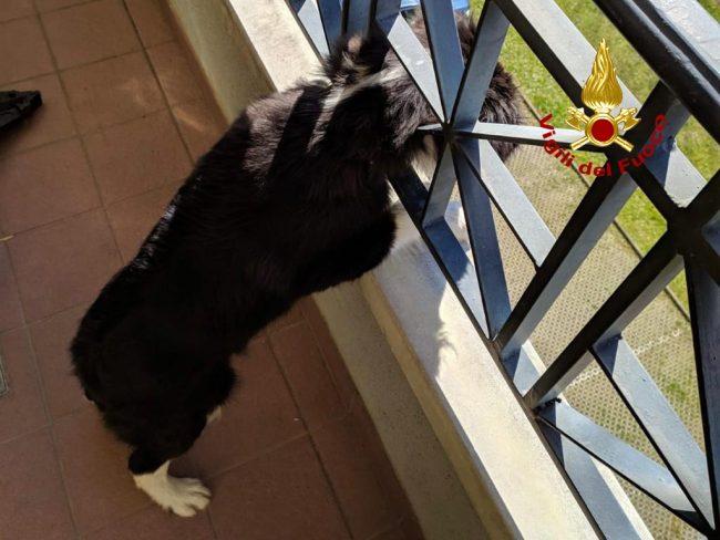 Le bizzarre foto del cane incastrato con la testa nella ringhiera del terrazzo