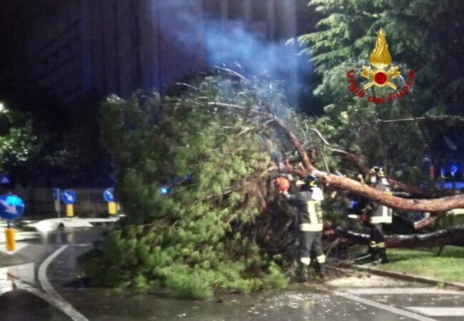 Maltempo Abano Terme, pino marittimo precipita in strada: un altro a rischio caduta