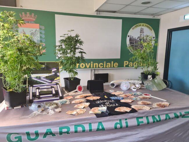 Il video della serra di marijuana coltivata in un appartamento a Padova
