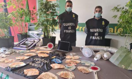 Il video della serra di marijuana sequestrata in un appartamento a Padova