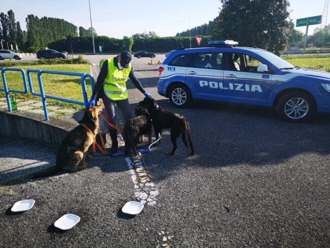 "Tre cani di grossa taglia in ""fuga"" in autostrada"