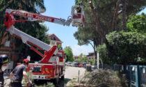 Cede l'asfalto vicino alla scuola, alberi pericolanti tagliati dai Vigili del fuoco