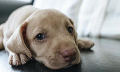 Calci e strattoni al suo cane: denunciato 39enne di Piove di Sacco