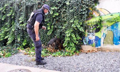 Spaccio, cani poliziotto setacciano Padova