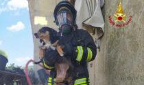 Anziana salvata dalle fiamme con i due cani: le foto dell'incendio a Lozzo Atestino